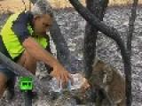 Koala Lucky Escape From Massive Bushfire In Australia