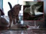 Kitten Goes Berserk On IPhone