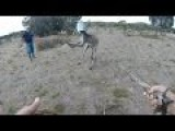 Kangaroo Gets Watering Can On Head Removed