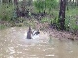 Kangaroo Almost Drown In Water Dog