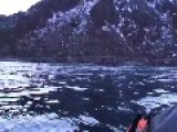 Kayaker Has Close Encounter With Hunting Whales