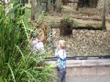 Kids Play Peek-A-Boo With Tiger At Zoo