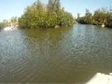Key Largo Croc