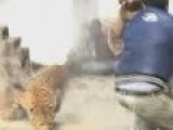 Leopard On The Loose In Indian Hospital