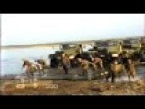 Last Soviet Military Crossing River Drill 1990 - Russian Ukranian Trucks