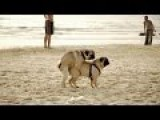 LOL !!!! - Silly Animal Behavior | Funny Animal | Funny Video