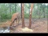 Live Deer Trail