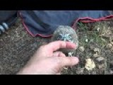 Little Owl Chick Filin And Moon In The Forest