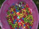 Lottie Belle The Rabbit Delights In A Ball Pond