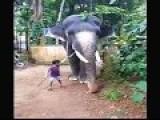 Little Boy Taming A Elephant!