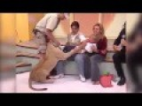 Lion Attacks Baby On Live T.V