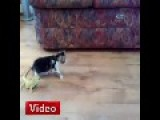 Little Bearded Dragons Vs Kitty