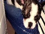 Little Puppy Produces A Huge Snore