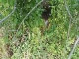 Litter Of Newborn Kittens Found In Forest