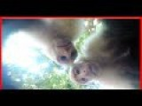 Monkey Steals GoPro! For Taking SELFIES