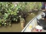 Man Grabs Huge Anaconda By The Tail