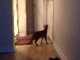 My Cat Opening The Bathroom Door