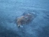 Man Finds Fox Frozen In Swedish Lake