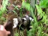 Man Rescues Cat From Boa Constricter