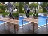Making Waves Swimmers Epic Fail To Dive Off Table Into Pool