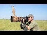 Meerkats Use Photographer As Look Out Post