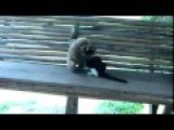 Monkey Teased Cat