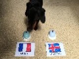 Mini Dachshund Correctly Predicts Result Of France And Iceland Match At Euro 2016