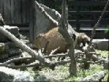 Monkey Pushes Capybara Into Pond