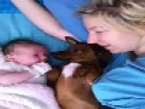 Mum, Baby And Puppy Relax On A Sleepy Morning