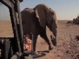 Mother Elephant Reunited With Baby