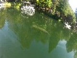 Manatee Swims Under Paddleboard