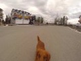 My Wiener Dog Loving Fetch With My Quadcopter
