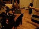 My Noisy Weird Flipping Cat Moxie.***LOW LIGHT WARNING*** FIlmed With Casio Exilim