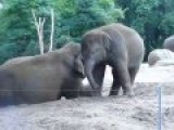 Mom Wants A Nap, Baby Elephant Disagrees