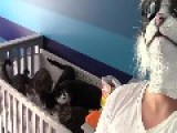 Man In Cat Mask Scares Cats