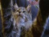 My New Kitten-say