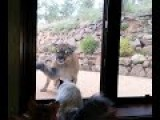 Mountain Lion Vs Kitty