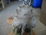 Mr. Wizard, My Green Iguana, Comes When Called!