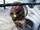 Monkey Give A Fuck