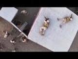 Marines Raid Enemy Compound - Helicopter Raid Exercise