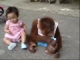 Monkey Doesn't Want To Share Milk With Baby