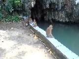 Man Is Loving The Monkey Play