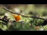 Macro Videography - Samples Autumn 1080p