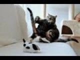 MMA Kitten Vs Adult Cat, Robotic Dog & Laser