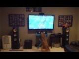 My Dog Missed Football