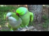 MUST SEE !!! Give Me A Kiss? Forgive Me ! A Very Amorous Parrot - LOL