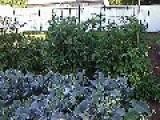 My Garden Pt1