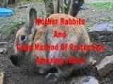 Mother Rabbits And Cubs Method Of Protection - Amazing Video 2014!