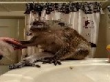 Monkey Takes A Bath Before Bed