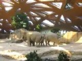 Mother Elephant Reacts To Baby Slipping And Falling On His Back